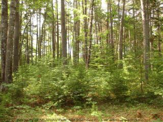 Photo 10: Lot 11 RAFUSE POINT Road in Pleasantville: 405-Lunenburg County Vacant Land for sale (South Shore)  : MLS®# 202122075