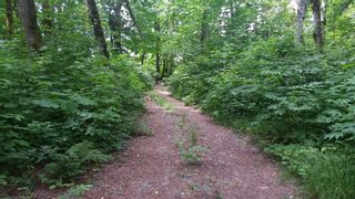 Photo 5: DL 992 MAGEE Road in Squamish: Upper Squamish Land for sale : MLS®# R2528687