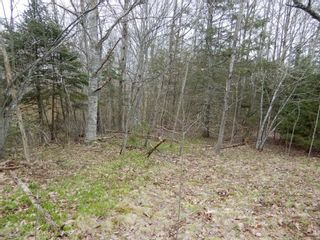 Photo 4: Highway 4 in Salt Springs: 108-Rural Pictou County Vacant Land for sale (Northern Region)  : MLS®# 202111268