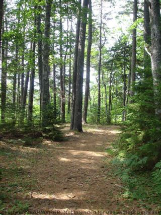 Photo 16: Lot 11 RAFUSE POINT Road in Pleasantville: 405-Lunenburg County Vacant Land for sale (South Shore)  : MLS®# 202100151