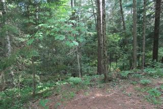 Photo 10: 300 Pinery Road in Kawartha Lakes: Rural Somerville Property for sale : MLS®# X4840235