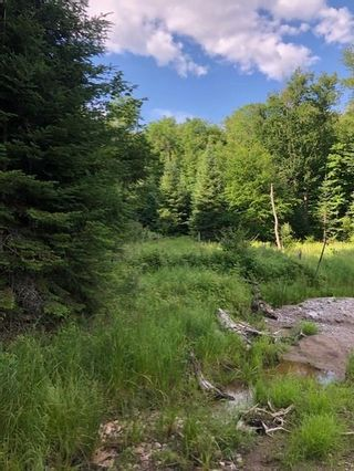 Photo 8: A 790 Garage Road in Burk's Falls: Vacant Land for sale : MLS®# H4112135