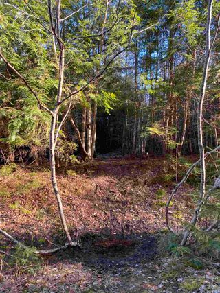 Photo 20: Saunders Road in Durham: 108-Rural Pictou County Vacant Land for sale (Northern Region)  : MLS®# 202108674