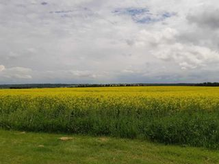Photo 3: 3 Coal Mine Road: Rural Sturgeon County Land Commercial for sale : MLS®# E4207456