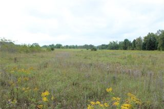 Photo 4: Lot 13 Portage Road in Kawartha Lakes: Kirkfield Property for sale : MLS®# X3306942