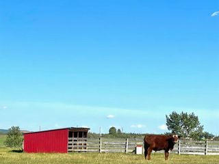 Photo 50: 370004 160 Street W: Rural Foothills County Detached for sale : MLS®# A1145850