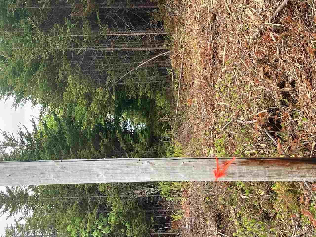 Photo 9: Photos: 1405 Highway 7 in Marie Joseph: 303-Guysborough County Vacant Land for sale (Highland Region)  : MLS®# 202010345