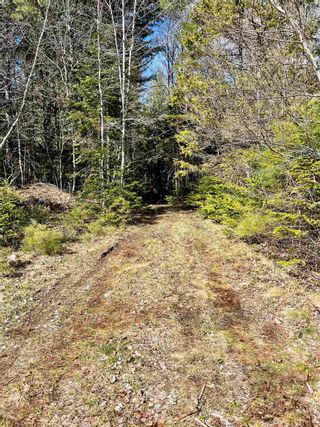 Photo 13: Lot VH-1 Highway 10 in Meisners Section: 405-Lunenburg County Vacant Land for sale (South Shore)  : MLS®# 202111350