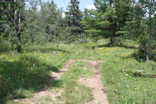 Photo 30: Lt 12 N Doyle Road in Kawartha Lakes: Rural Bexley House (1 1/2 Storey) for sale : MLS®# X5357700