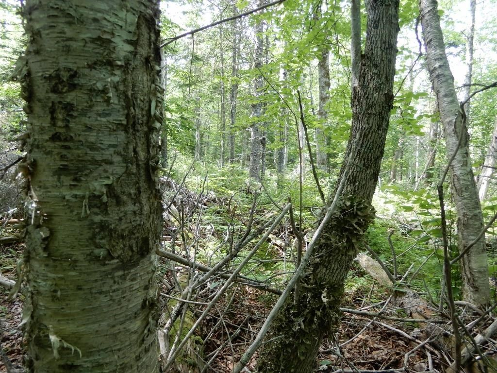 Main Photo: 299 New Lairg Road in New Lairg: 108-Rural Pictou County Vacant Land for sale (Northern Region)  : MLS®# 202117815