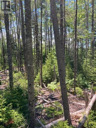 Photo 1: Lot Hirtle Road in Voglers Cove: Vacant Land for sale : MLS®# 202116540