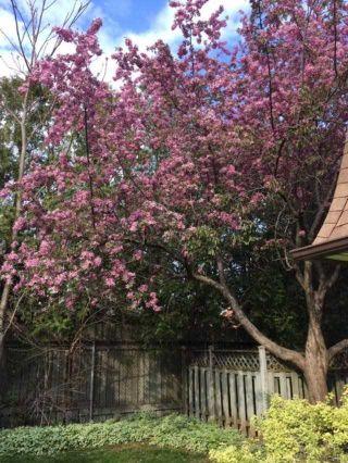 Photo 19: 4044 Longmoor Drive in Burlington: Shoreacres Condo for sale : MLS®# W4703496
