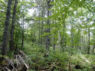 Photo 2: 299 New Lairg Road in New Lairg: 108-Rural Pictou County Vacant Land for sale (Northern Region)  : MLS®# 202117815