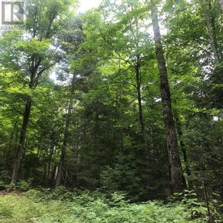 Photo 10: 0 OTTAWA Avenue in South River: Vacant Land for sale : MLS®# 40156406