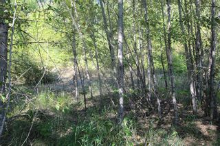 Photo 9: 26 2481 Squilax Anglemont Road: Lee Creek Land Only for sale (Shuswap)  : MLS®# 10116283
