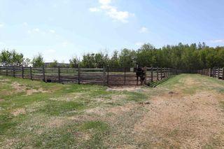 Photo 31: 48342 RR 262: Rural Leduc County House for sale : MLS®# E4231120