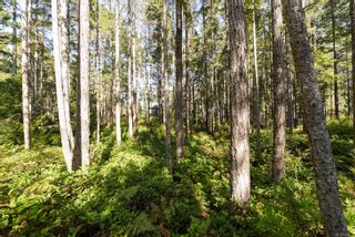 Photo 13: Lot 191 Brent Rd in : CV Comox Peninsula Land for sale (Comox Valley)  : MLS®# 855702
