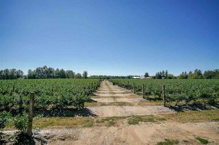 Photo 4: 27.28AC 4 Avenue in Langley: Land for sale : MLS®# R2362643
