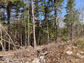 Photo 9: 65 Eaglet Lane in Musquodoboit Harbour: 35-Halifax County East Vacant Land for sale (Halifax-Dartmouth)  : MLS®# 202109854