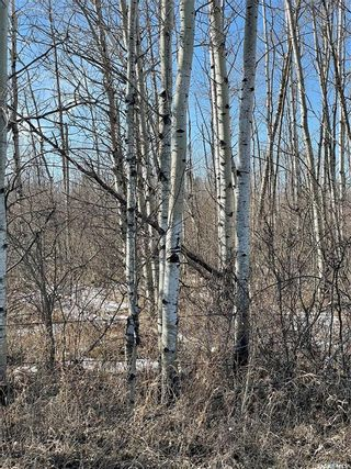 Photo 19: 65 acres land in Preeceville: Lot/Land for sale : MLS®# SK848653
