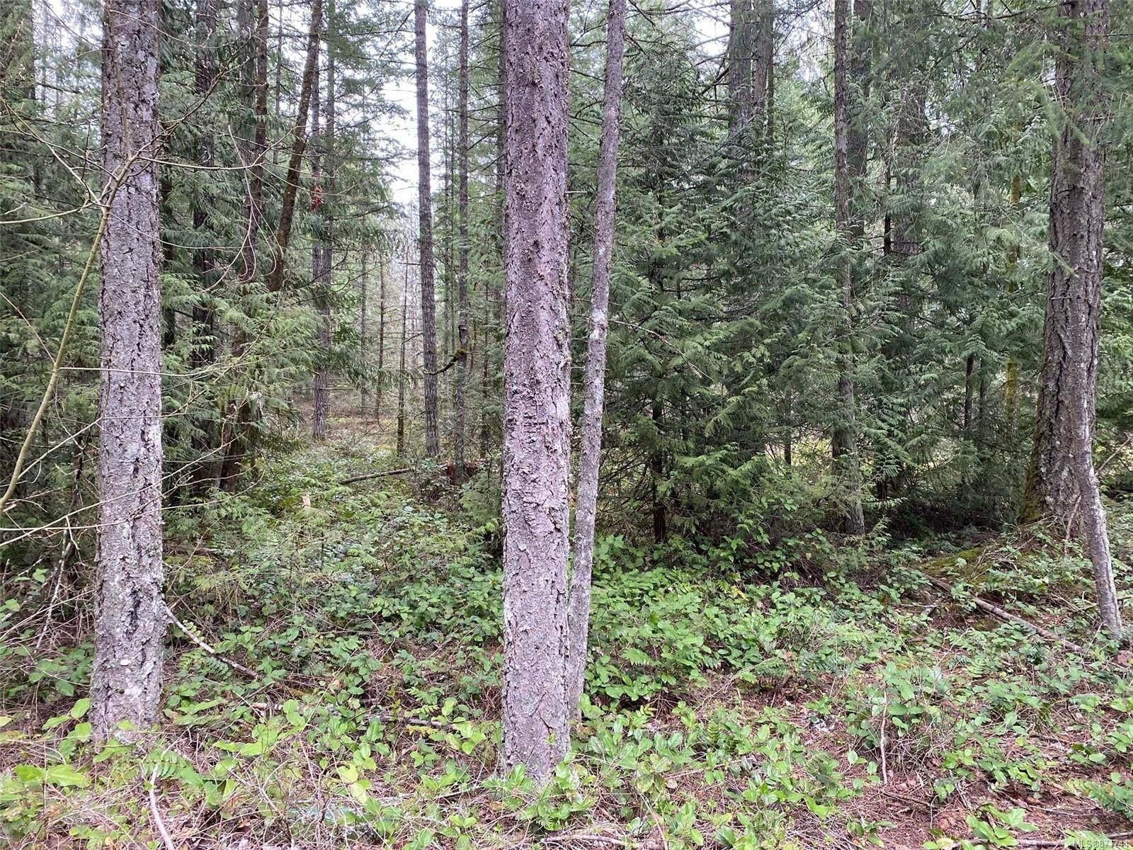Main Photo: 2330 Extension Rd in : Na Chase River Land for sale (Nanaimo)  : MLS®# 871744