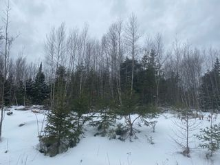 Photo 2: Danvers Road in Danvers: 401-Digby County Vacant Land for sale (Annapolis Valley)  : MLS®# 202103071