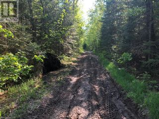 Photo 5: N/A RANEY Road E in Sundridge: Vacant Land for sale : MLS®# 40129602