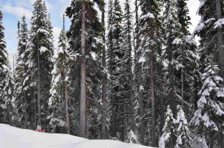 """Photo 2: 210 ALPINE Way in Smithers: Smithers - Rural Land for sale in """"Hudson Bay Mountain Estates"""" (Smithers And Area (Zone 54))  : MLS®# R2453895"""