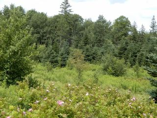 Photo 12: 299 New Lairg Road in New Lairg: 108-Rural Pictou County Vacant Land for sale (Northern Region)  : MLS®# 202117815
