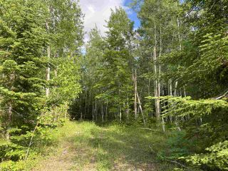 Photo 8: 38 Stewart Road in Lyons Brook: 108-Rural Pictou County Vacant Land for sale (Northern Region)  : MLS®# 202011938
