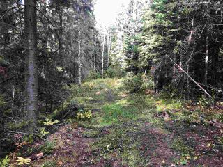"""Photo 10: DL 1599 W 16 Highway in Prince George: Lafreniere Land for sale in """"LAFRENIERE"""" (PG City South (Zone 74))  : MLS®# R2508129"""