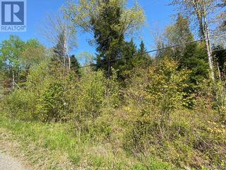 Photo 12: 5264 Rte 770 in Rollingdam: Vacant Land for sale : MLS®# NB058269