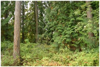 Photo 7: Lot 49 Forest Drive: Blind Bay Vacant Land for sale (Shuswap Lake)  : MLS®# 10217653