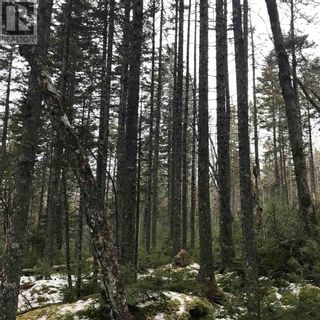Photo 4: Lot 14 Tupper Lake in Westfield: Vacant Land for sale : MLS®# 202110832
