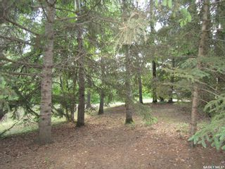 Photo 23: William Acreage in Nipawin: Residential for sale (Nipawin Rm No. 487)  : MLS®# SK839684