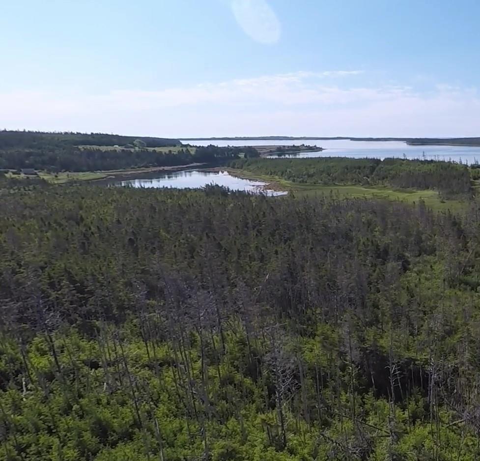 Main Photo: 1405 Highway 7 in Marie Joseph: 303-Guysborough County Vacant Land for sale (Highland Region)  : MLS®# 202010345