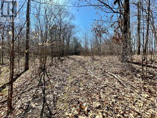 Photo 12: 0 COUNTY ROAD 36 in Bobcaygeon: Vacant Land for sale : MLS®# 40095128