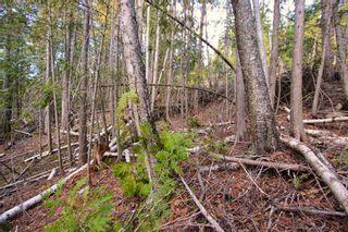 Photo 12: Lot 41 Klondike Trail: Anglemont Vacant Land for sale (North Shuswap)  : MLS®# 10228883