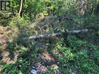 Photo 11: N/A RANEY Road E in Sundridge: Vacant Land for sale : MLS®# 40129602