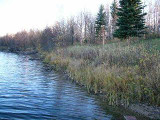Photo 5: TWP RD 633 A Rge Rd 261A: Rural Westlock County Rural Land/Vacant Lot for sale : MLS®# E3283338