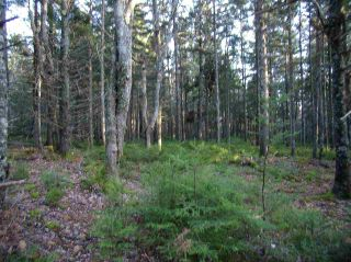 Photo 9: Hwy 3 Tusket Highway in Tusket: County Tusket- Hwy 308 Vacant Land for sale (Yarmouth)  : MLS®# 201726173