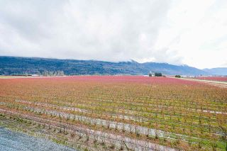 Photo 17: 40320 NO. 5 Road in Abbotsford: Sumas Prairie Agri-Business for sale : MLS®# C8036514