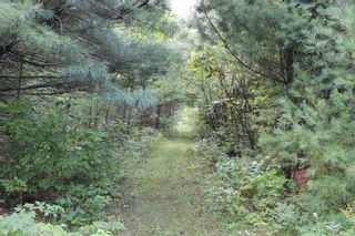 Photo 35: 3764 County Rd 46 in Havelock-Belmont-Methuen: Havelock House (Bungalow) for sale : MLS®# X5364760