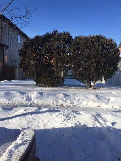 Main Photo: 11932 64 Street NW in Edmonton: Zone 06 Vacant Lot for sale : MLS®# E4226246
