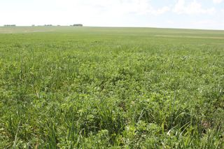 Photo 3: ON Range Road 12 in Rural Rocky View County: Rural Rocky View MD Commercial Land for sale : MLS®# A1116953