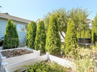 Photo 41: 147 Cambridge St in : Vi Fairfield West House for sale (Victoria)  : MLS®# 885266