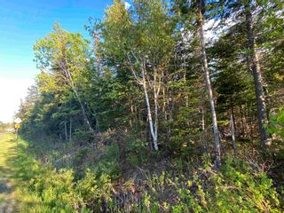 Photo 3: 16 acres Caribou Island Road in Caribou Island: 108-Rural Pictou County Vacant Land for sale (Northern Region)  : MLS®# 202104068