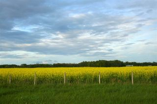 Photo 7: 27232 TWP RD 511: Rural Parkland County House for sale : MLS®# E4254971