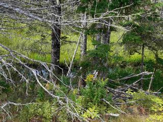 Photo 10: 6125 Gabarus Highway in French Road: 207-C. B. County Vacant Land for sale (Cape Breton)  : MLS®# 202122028