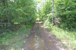 Photo 29: Lt 12 N Doyle Road in Kawartha Lakes: Rural Bexley House (1 1/2 Storey) for sale : MLS®# X5357700